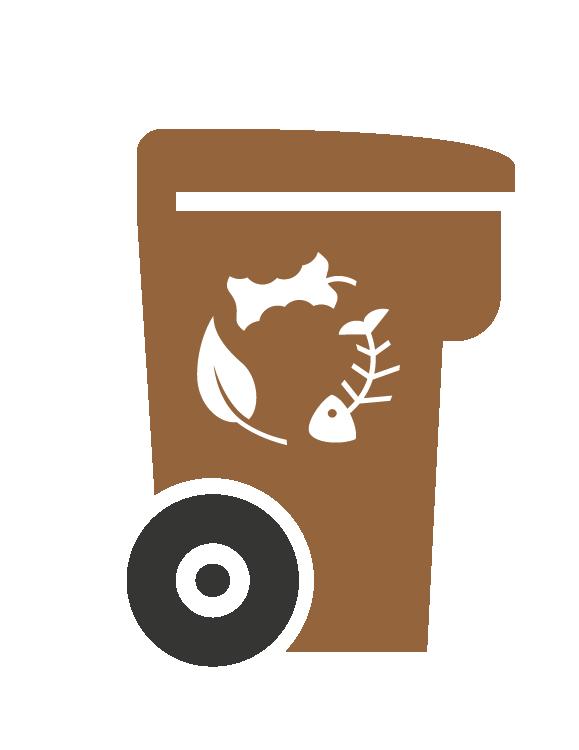 bac-brun